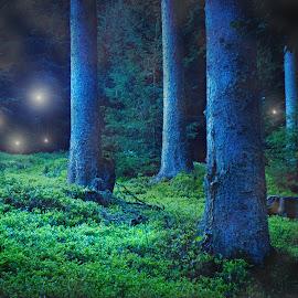 Fairies by Stefan Friedhoff - Digital Art Places ( forrest, fairies, mystical, fairy, light,  )