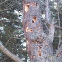 Wood pecker holes