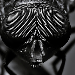 Cute Eyes by Sengkiu Pasaribu - Black & White Macro