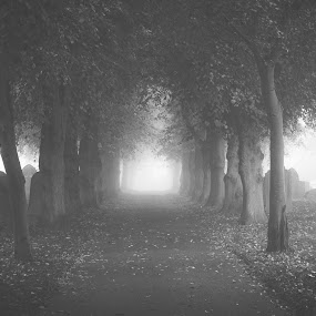Silent Hill by Bryn Graves - City,  Street & Park  Cemeteries ( graves, sotnes, cemetery, silence, mood, trees, light )