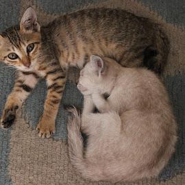 Totoi and Tatai by Dura Zaman - Animals - Cats Kittens ( cat, pet, malaysia, kittens, strays )