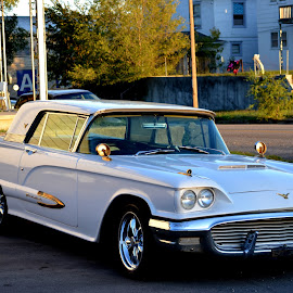 57 Thunderbird by Michael Griffin - Transportation Automobiles ( ride, classic car, automobile, auto, ford )