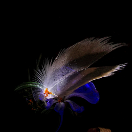 Cabaret    by Jurijs Ratanins - Instagram & Mobile Android ( mobilography, leave, nature, feather, flower )