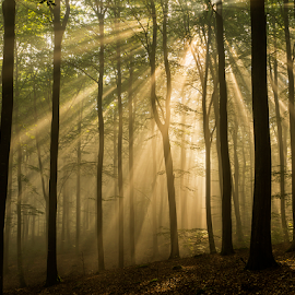 Rays for you by Peter Samuelsson - Nature Up Close Trees & Bushes