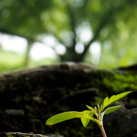 You Can Grow by Colton Diabo - Landscapes Forests ( tree, seed, green, symbolic, growth, hope )