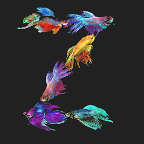 Fighting fish Z by Janna Morrison - Typography Single Letters ( fighting fish z )