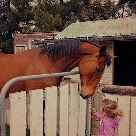 Friends by Michelle du Plooy - Babies & Children Children Candids ( child, equine, friends, girl, horse, toddler,  )