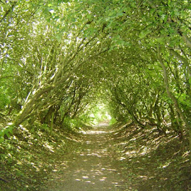 Tree Tunnel by Julie Kendall - Landscapes Forests ( wood, pathway, tree, slimbridge, tree lined, woodland, forest, tree tunnel,  )