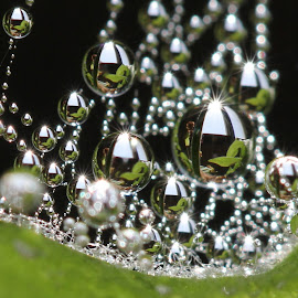I'll make you happy by Lala Fuad - Nature Up Close Natural Waterdrops