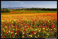 Agro Romano sulla Collatina