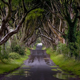 Dark Hedges by Stefan Friedhoff - Landscapes Forests ( hedges, ireland, thrones, dark, trees, antrim, game, road,  )