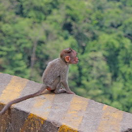 Its a big big world!!!  by Lalit Nagpal - Animals Other ( animals, nature, jungle, forest, monkey )