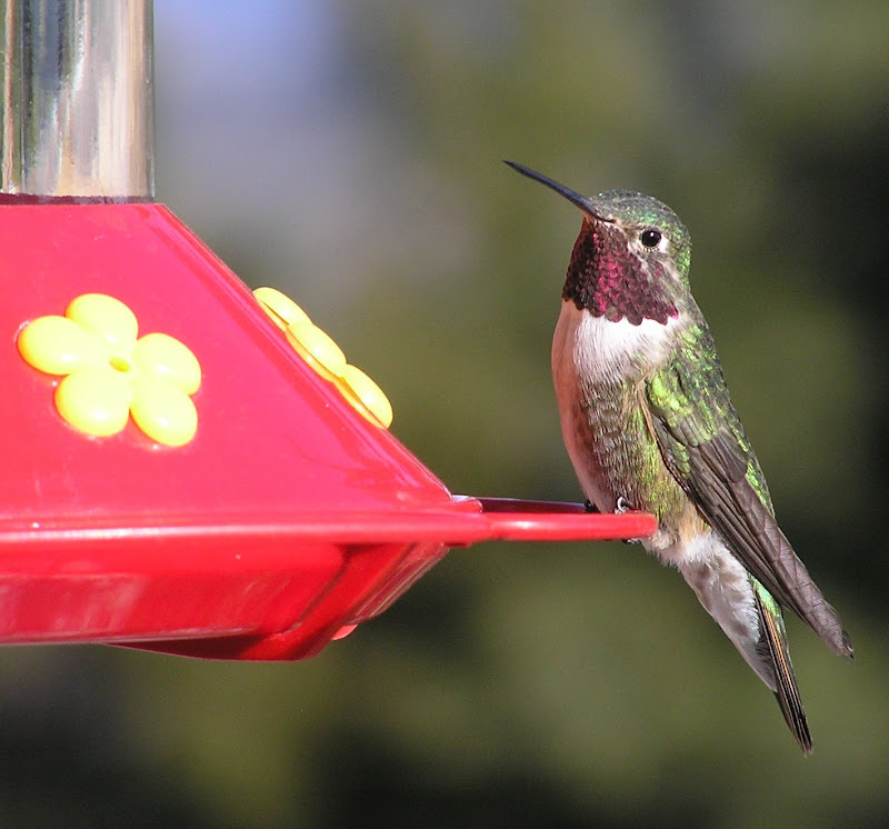 Hummer Anticipation