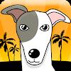 Greyhound Racer