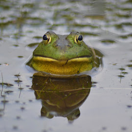 Watching by Traci Witham - Animals Amphibians (  )
