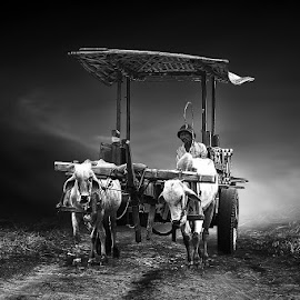 grobag sapi by Abhirama Arro - Black & White Street & Candid