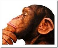-mono-pensador