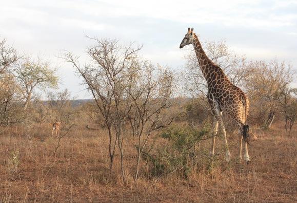South Africa. Johanesburg, Kruger park, pretoria 496