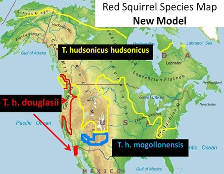 Red Squirrel Species Map New Model