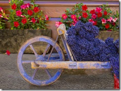 Old-Wooden-Cart-with-Fresh-Cut-Lavender-Sault-Provence-France-