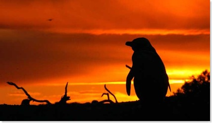 pinguinos4