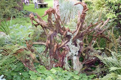Roots shape