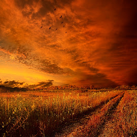Finding the Way Home by Phil Koch - Landscapes Prairies, Meadows & Fields ( vertical, photograph, bench, blue   sky, fine art, yellow, travel, leaves, love, sky, nature, tree, autumn, trail, light, picnic table, flower, orange, twilight, agriculture, horizon, portrait, environment, dawn, season, serene, outdoors, trees, wild   flowers, floral, inspirational, natural light, wisconsin, ray, road, landscape, phil koch, photography, sun, flying, path, horizons, inspired, formation, office, clouds, park, green, back light, scenic, morning, ferns, shadows, field, flight, red, blue, color, sunset, peace, fall, meadow, landscapephotography, beam, earth, sunrise, geese, landscapes, hike, mist )