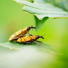 tumpukan  by Fathya Zainuri - Animals Insects & Spiders ( animals, insetc, insects, animal )