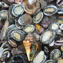 Mollusks World