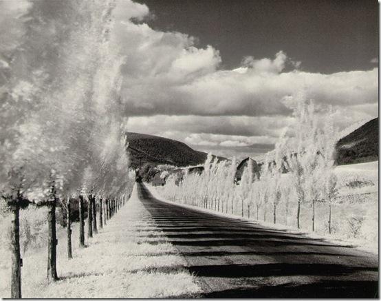 [Foto] Minor White - Poplar Trees