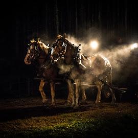 by J Kelley - Animals Horses