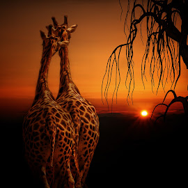 True love by George Leontaras - Digital Art Animals ( digital art, fine art, photoshop photography, manipulation )