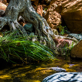 Fairytales by Joel Hanger - Nature Up Close Trees & Bushes ( water, grass, flowing, rock, forest, flow, fantasy, blades, red, tree, flood, sedona, shade )