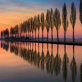 Trees reflections by Roberto Melotti - Landscapes Sunsets & Sunrises ( dawn, sunset, trees, reflections, bentivoglio, nikon d810, sunrise, italy )