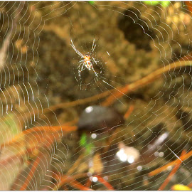 Over water by Kwong Chung-man - Nature Up Close Webs