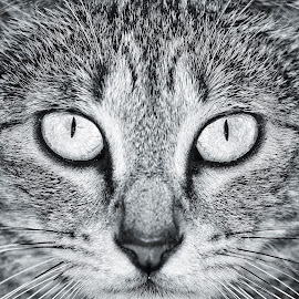 Mono by JO Azzopardi - Animals - Cats Portraits