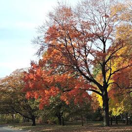 by Karen Jaffer - City,  Street & Park  City Parks ( autumn, color, trees )