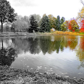 Transition by Jennifer Schmidt - Nature Up Close Water ( reflection, water pond, trees and pond, transition of color,  )