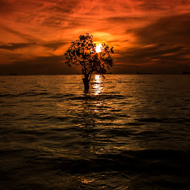 a Tree on Sunsets by Vicky Mahendra - Landscapes Sunsets & Sunrises ( tree, sunset, photographer, landscape photography, beach, landscapes, photography, , renewal, green, trees, forests, nature, natural, scenic, relaxing, meditation, the mood factory, mood, emotions, jade, revive, inspirational, earthly )