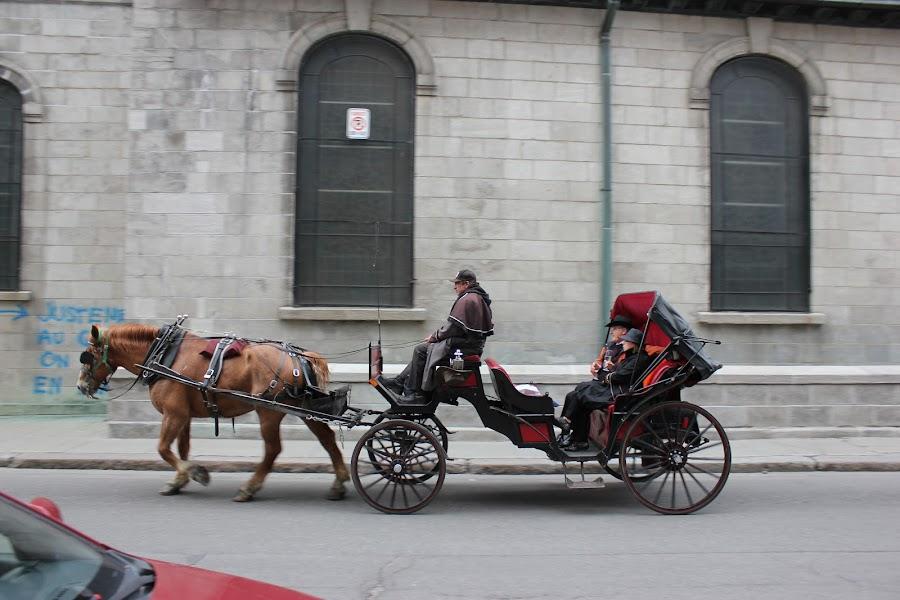 Horse Cart by Thakkar Mj - Transportation Other ( horse, horse cart, cart, transportation, passenger vehicle,  )
