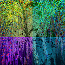 arterial tree by Robert Happersberg - Digital Art Things ( body, medical, heart, trees, veins, cool photo )
