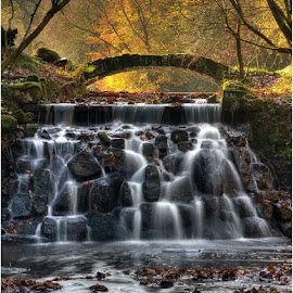 Sunnyhurst Cascades by Jane Ball - Landscapes Waterscapes