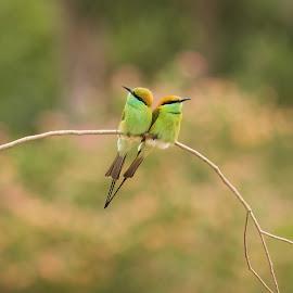 V  2 by Sankaran Balaji - Animals Birds