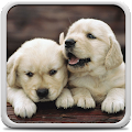 Puppies Live Wallpaper APK for Bluestacks