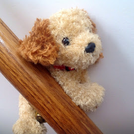 Doggie stuck by Terry Linton - Artistic Objects Toys (  )