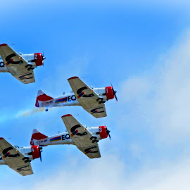 Harvards by Amanda Coertze - Transportation Airplanes ( airplanes, harvards, randairshow )