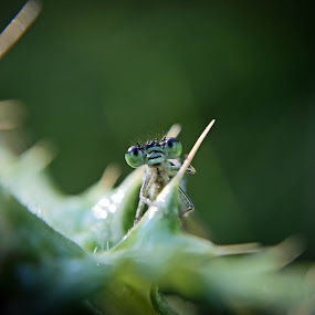 look... by Tanya Popove - Animals Insects & Spiders