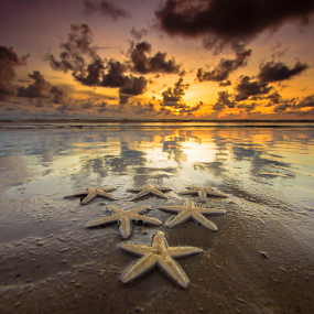 Asteroidea by Andrew Micheal - Landscapes Beaches