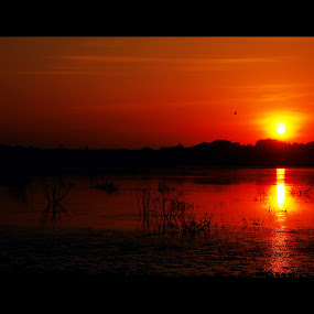 its orange time by Praveen Premkumar - Landscapes Sunsets & Sunrises ( orangish, sun rise, hot, sun,  )