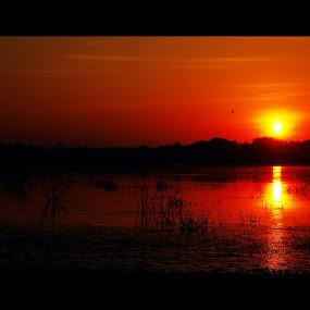 its orange time by Praveen Premkumar - Landscapes Sunsets & Sunrises ( orangish, sun rise, hot, sun,  )